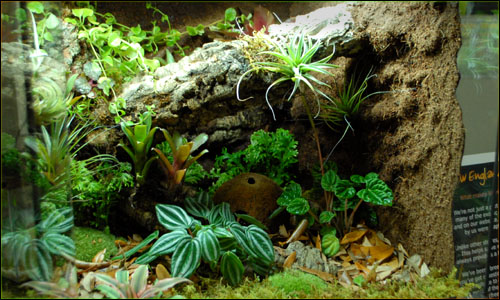 Custom Vivarium Background Finished Custom Terrarium Background Finished