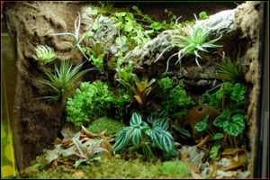 NEHERP Custom Vivarium Background Tutorial - Amazing diy non living terrarium