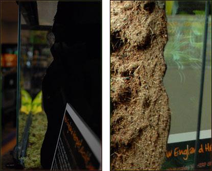 Neherp Custom Vivarium Background Tutorial