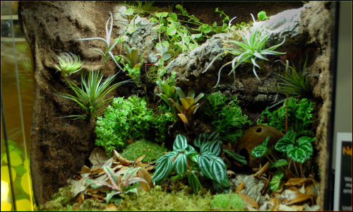 Custom Vivarium Background Finished