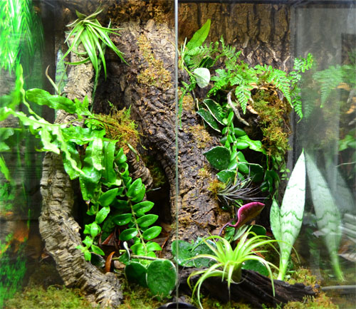 Finished Gargoyle Gecko Crested Gecko Vivarium
