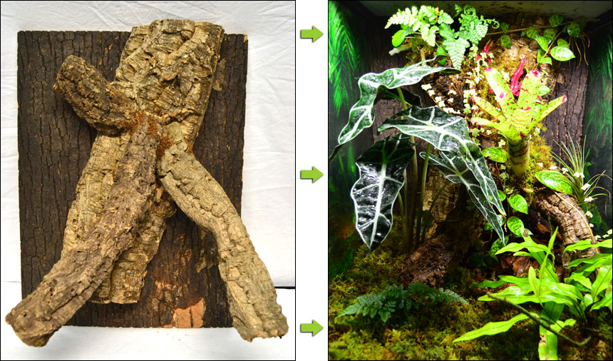 Example Of Custom Background For Gecko Vivarium