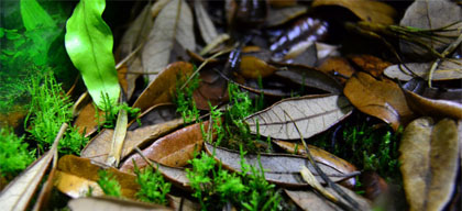 Ideal Natural Isopod Habitat