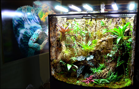 Neherp Vivarium Lighting 101 Everything You Need To