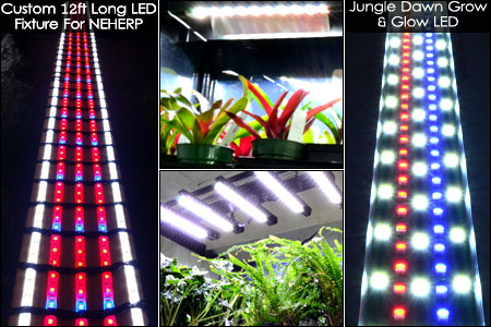 Vivarium PAR Light Par Light Ex&les & NEHERP - Vivarium Lighting 101 - Everything you need to know to ... azcodes.com