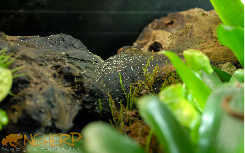 Springtails In Vivarium