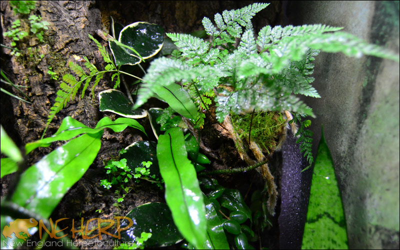 Gecko Background Plant Growth