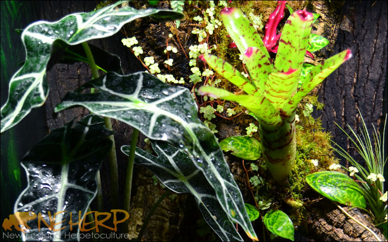 Mature Plant Growth For Gecko Terrarium Background