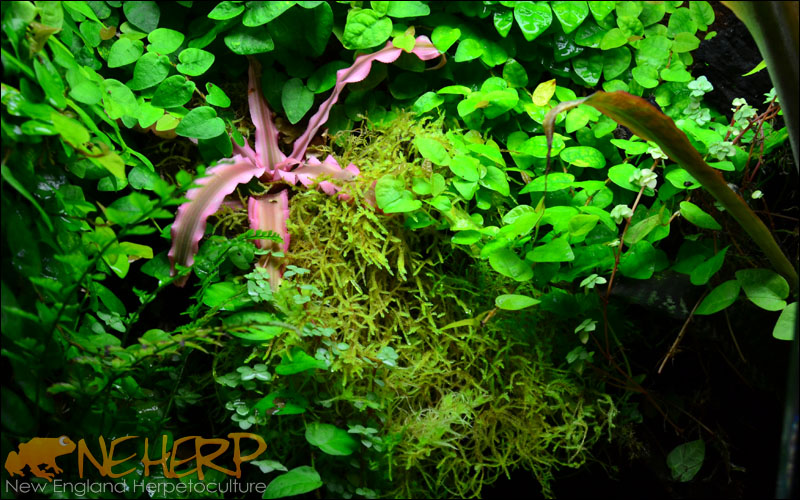 Custom Vivarium Background Grown In