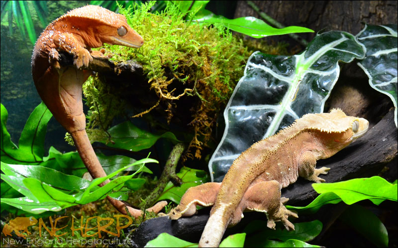 Best Lights For Planted Terrariums With Geckos