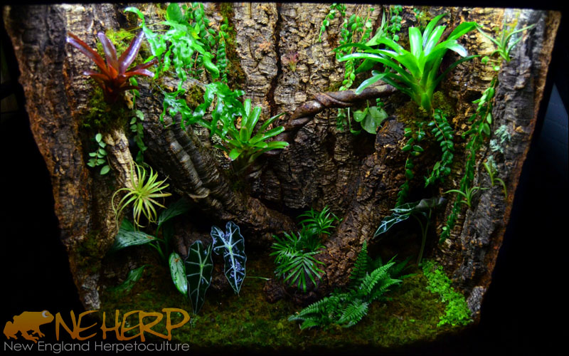 Custom Vivarium Background With Cork