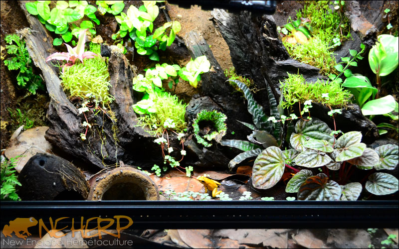 Glass Enclosures For Bioactive Terrariums Neherp Your