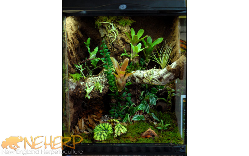 Custom Bioactive Terrarium For Frogs