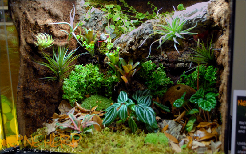 Vivarium With Custom Background