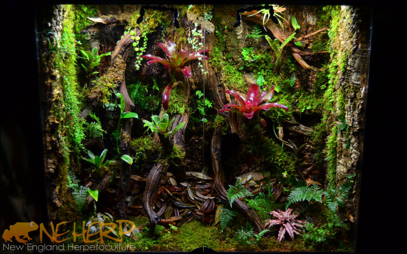 Beautiful Custom Vivarium