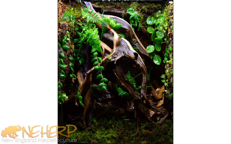 Custom Vivarium For Harvard Museum of Natural History