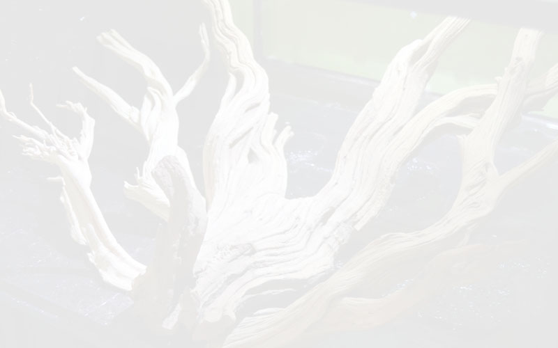 Ghostwood Info Page Background