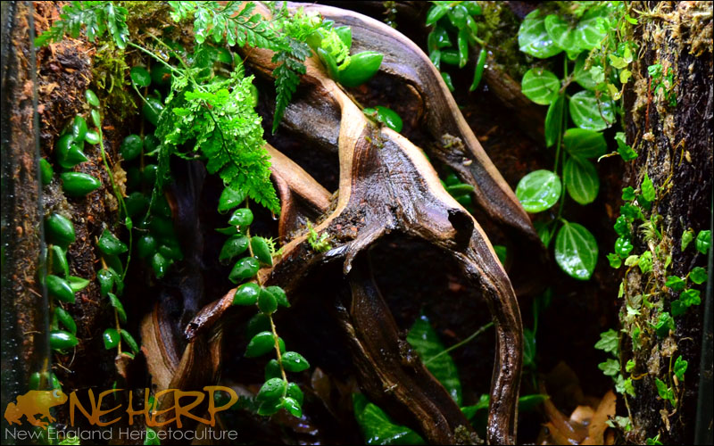 Ghostwood Terrarium Background Texture With Vines