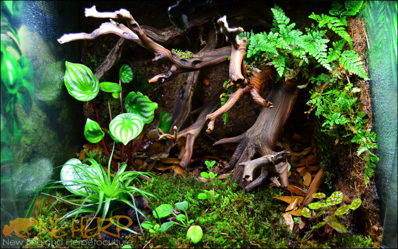 Bioactive Terrarium Background With Plants and Ghostwood