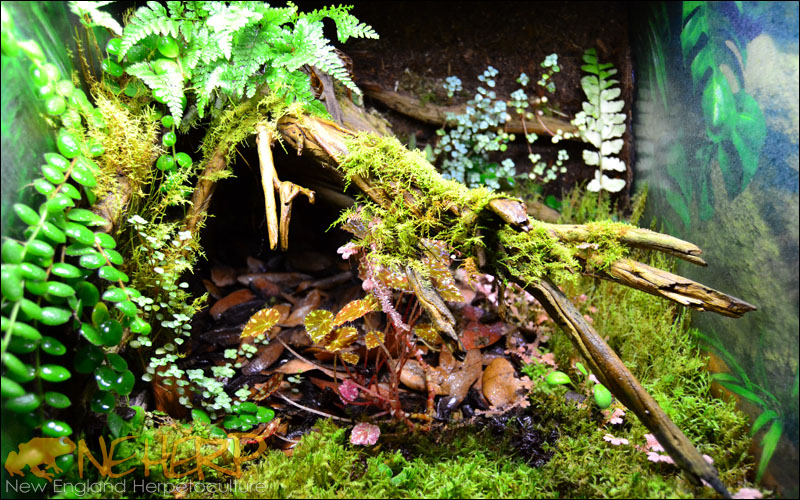 Moss Vivarium Acclimated