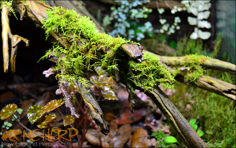 Moss Growth Under NEHERP LEDs