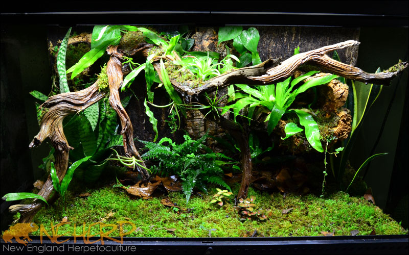 Giant Gecko Terrarium Background