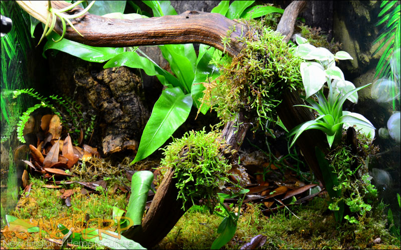 Bioactive Vivarium with best Jungle Dawn LED lighting