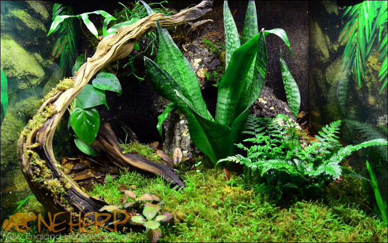 Basic Gecko Vivarium Background