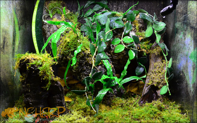 Basic Custom Terrarium Background For Geckos