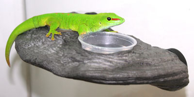 Magnaturals Gecko Feeder Ledges