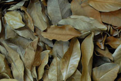 Magnolia Leaf Litter For Bioactive Terrariums