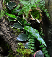 NEHERP Live Moss Slurry Growing Epiphytically