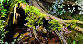 NEHERP Live Moss Slurry Growing On Ghostwood