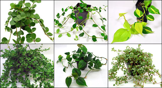 Vivarium Vines & Trailing Plants For 36x18x24 Enclosure