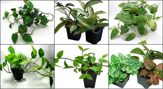 Live Vivarium Plant Kit For 24x18x18 Terrariums Housing Larger