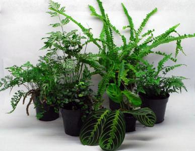 neherp plant kits. Black Bedroom Furniture Sets. Home Design Ideas