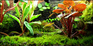 Vivarium Moss Low Growing Vivarium Moss Terrarium Moss