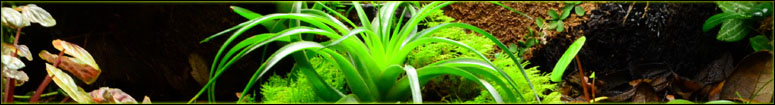 Tillandsia Care In Vivarium