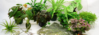 Vivarium Plants