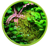 Grow Moss In Vivariums