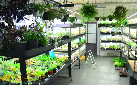 Indoor Terrarium Plant Grow Room