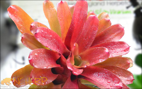 Bromeliads For Bioactive Terrariums