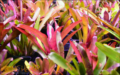Brightly Colored Bromeliads