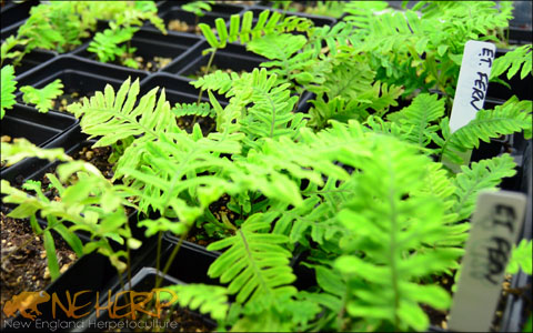 Live Plants For Vivariums Terrariums And Other Planted Tanks