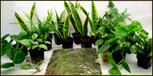Gecko Plant Packages For Terrariums & Vivariums