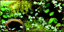 Moss For Terrariums & Vivariums