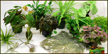 Plant Packages For Terrariums & Vivariums