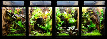 Custom Vivarium Supplies