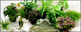 Vivarium Plant Packs