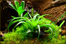 Tillandsia Care Vivarium